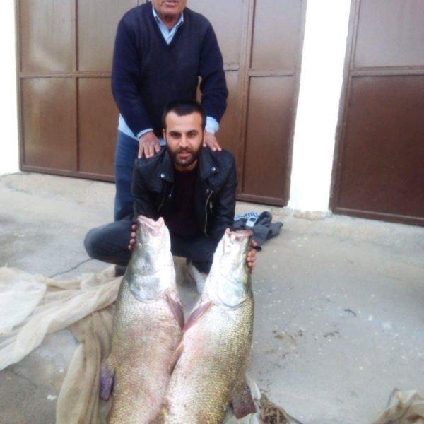 avcıkaşık balıklar